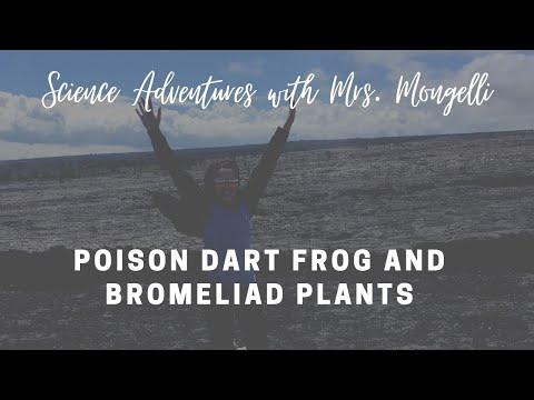 Poison Dart Frog and Bromeliad Plants