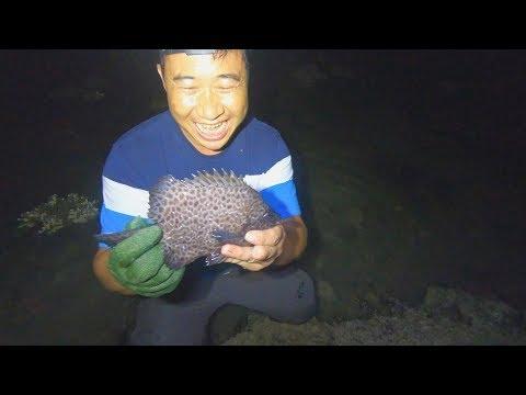 玉平大半夜摸黑去赶海,退潮后礁石区困不少好货,运气真的爆棚了