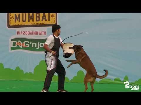 Event Highlights Pet Fed Mumbai