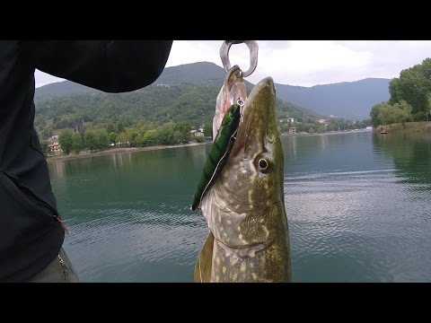 Per scaricare uomini vanno a pesca