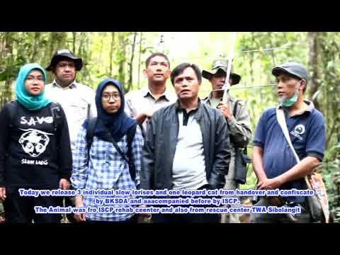 We,Kukang Sumatra(Slow Loris) need medical devices