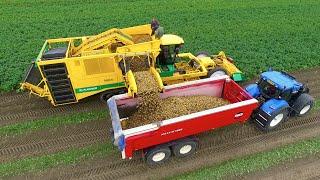 Potato Harvest | PLOEGER AR-4BX + Fendt & New Holland | Demijba / Van Peperstraten