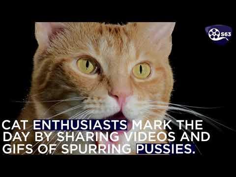 International Cat Day 2020