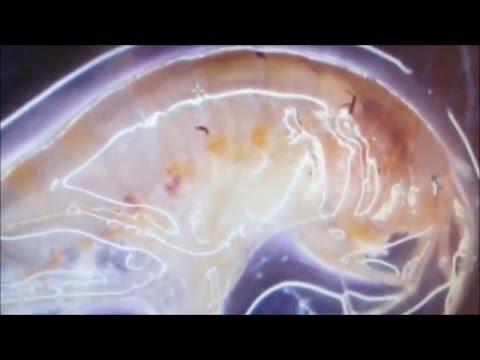 Parazita gyógyszer az emberekben vélemények
