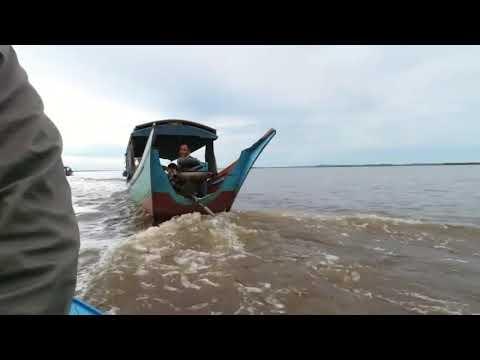 Pesut Sungai Mahakam