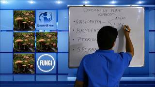 Learn Division Thallophyta meaning, concepts, formulas through Study
