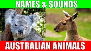 AUSTRALIAN ANIMALS Names and Sounds for Kids to Learn | Learning Australian Animal Names