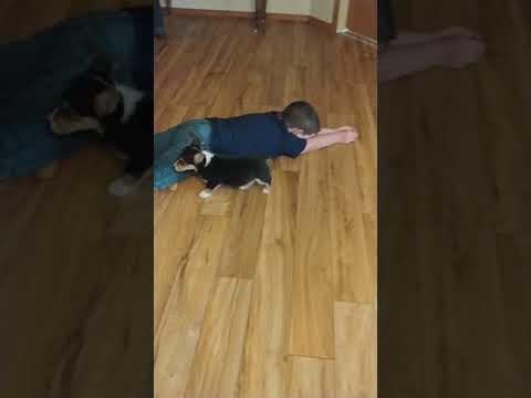 Nala and my grandkids playing