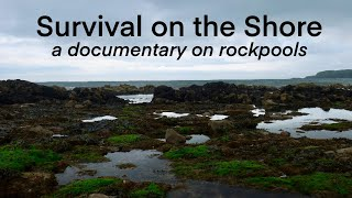 Survival on the Shore: a Marine Biology DOCUMENTARY on Rockpooling (When the Tide Retreats ep3)