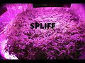SPLIFF  ( audio ) 1234 VERS