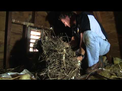 In Episode 71 of the On the Job Video series, Larry Janesky, owner and founder of Dr. Energy Saver, walks us through the attic of a home in Connecticut that had been previously insulated by another contractor to illustrate common mistakes being perpetrated by many insulation contractors across the country.