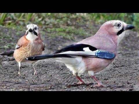 Música Birds & Ships