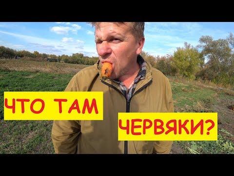 Деревенские будни / Убираем свеклу морковь и редьку в подвал