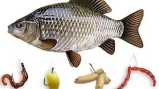 Где искать рыбу весной.