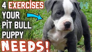4 BEST exercises for your new pit bull puppy!
