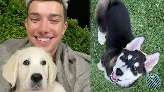 I babysit James Charles Puppy for 24 hours!