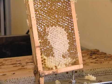 """Авторская программа Аллы Сапуновой """"Картинки из глубинки. История семьи пчеловодов"""""""