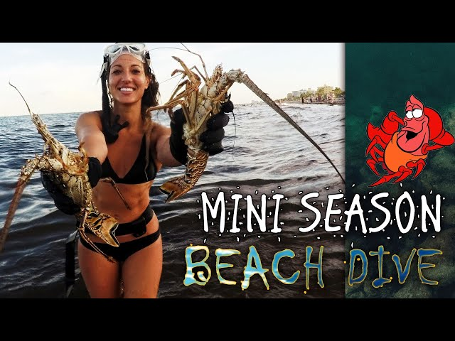 Nicole FREEDIVING for LOBSTER + SPEARFISHING!**100% Hand Grabbing ACTION!** No NETS or SNARES!