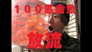 100匹の金魚を池に放流しちゃおう!!