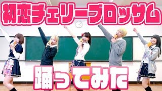 【制服】「初恋チェリーブロッサム」踊ってみた!まさかのご本家登場!