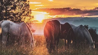 "Beautiful Peaceful Instrumental Music, Relaxing Instrumental Music ""Golden Coast"" 2 hours"