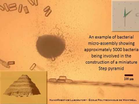 Watch Man-Controlled Bacteria Build A Nanoscale Pyramid