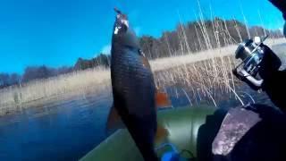 Ловля плотвы весной на чудском озере