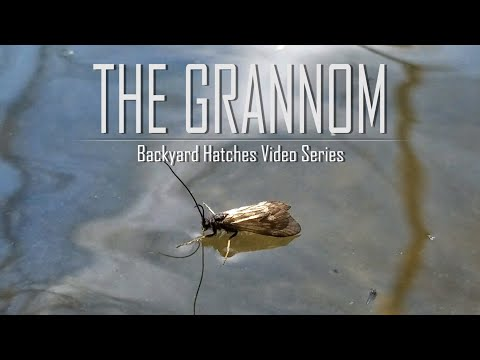 The Grannom | Backyard Hatches Video Series