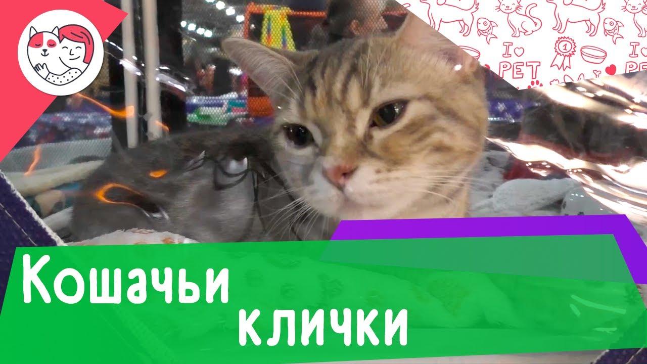 4 типа самых популярных кошачьих кличек