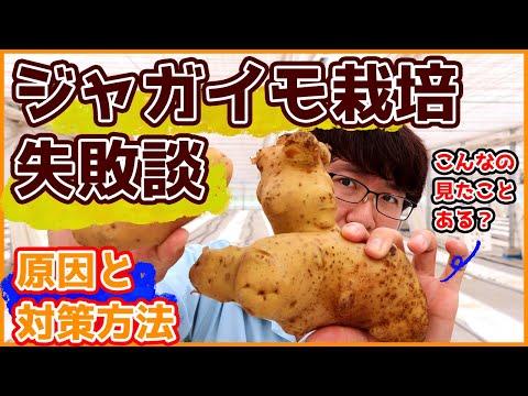 , title : '【解説】ジャガイモ大大大失敗!?ー原因と対策についてー