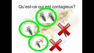 Explique-moi le cycle de vie du pou! Explication de Germaction