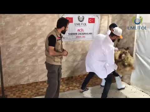 Suriye Adak Akika ve Sadaka Kurban Çalışmaları