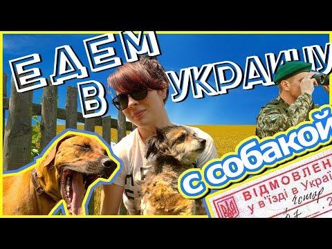 Как перевезти собаку через границу   УКРАИНА