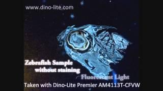 Ψηφιακά Μικροσκόπια με φθορίζον φωτισμό DINO-LITE
