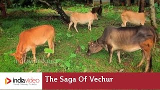 The Saga of Vechur