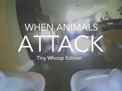 when-animals-attack---tiny-whoop-edition