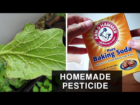 , title : 'HOMEMADE BAKING SODA PESTICIDE  | Combat Aphids in plants and leafy vegetables