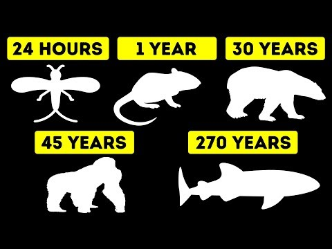 , title : 'The Shortest and Longest Lifespans of Animals