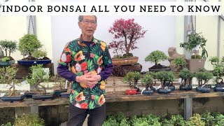Indoor Bonsai  'All You Need To Know'