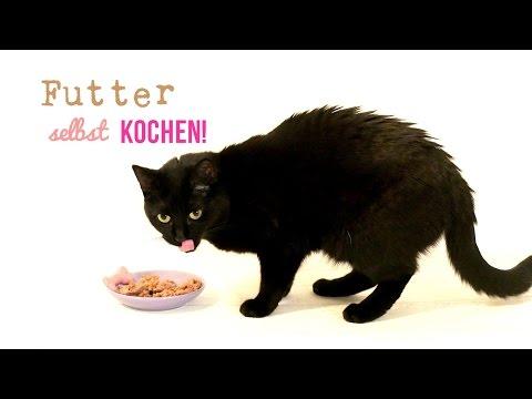 Katzenfutter Rezept - Katzenfutter selber kochen!