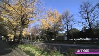 初冬の横浜?本牧三渓園・日本大通・山下公園・MM21?