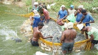 Fishing Net Full Of Fish - Fishing in Pond