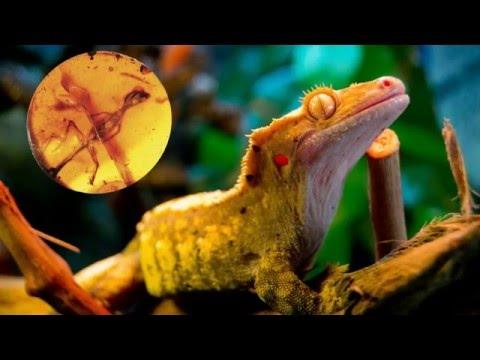 Ученые обнаружили янтарь с ящерицами возрастом 99 миллионов лет