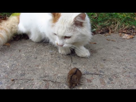 Rescue mice from white cat