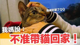 【好味小姐】我媽說帶貓就不要回去!可是現在...【好味貓日常】EP63