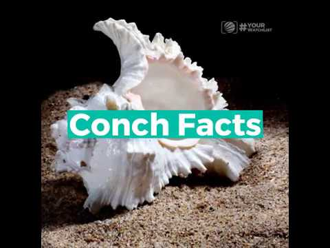 CVM LIVE - #YourWatchList: Conch Facts - March 8, 2019