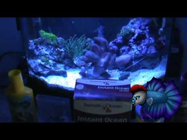 How To Set Up A Saltwater Tank Step by Step