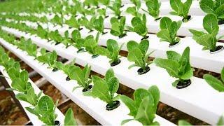 Cómo Tener Cultivos Hidropónicos - TvAgro Por Juan Gonzalo Angel