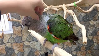 3 Cuddly Parrots Get Head Scratches