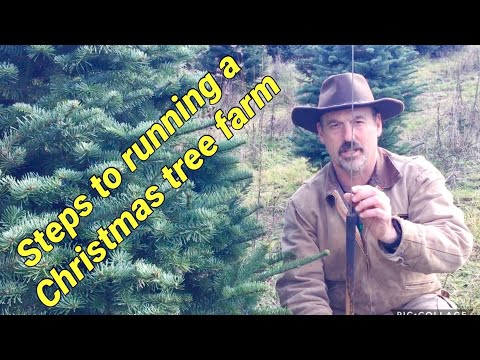, title : 'Running a Christmas Tree Farm: A brief overview